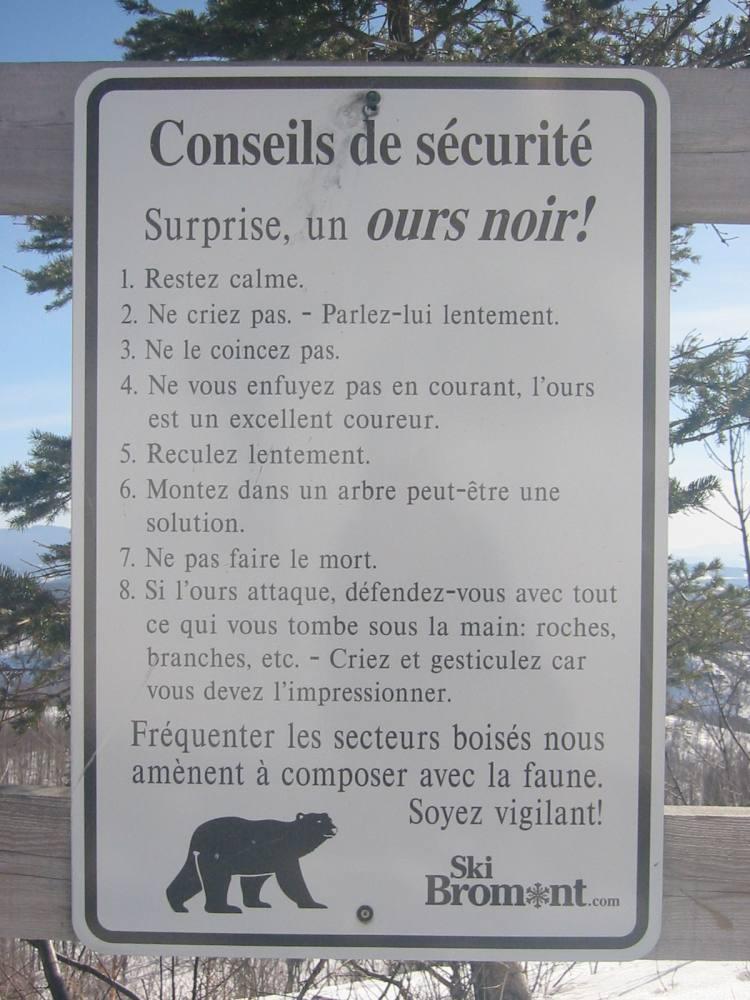 Bären auf der Kanada-Reise